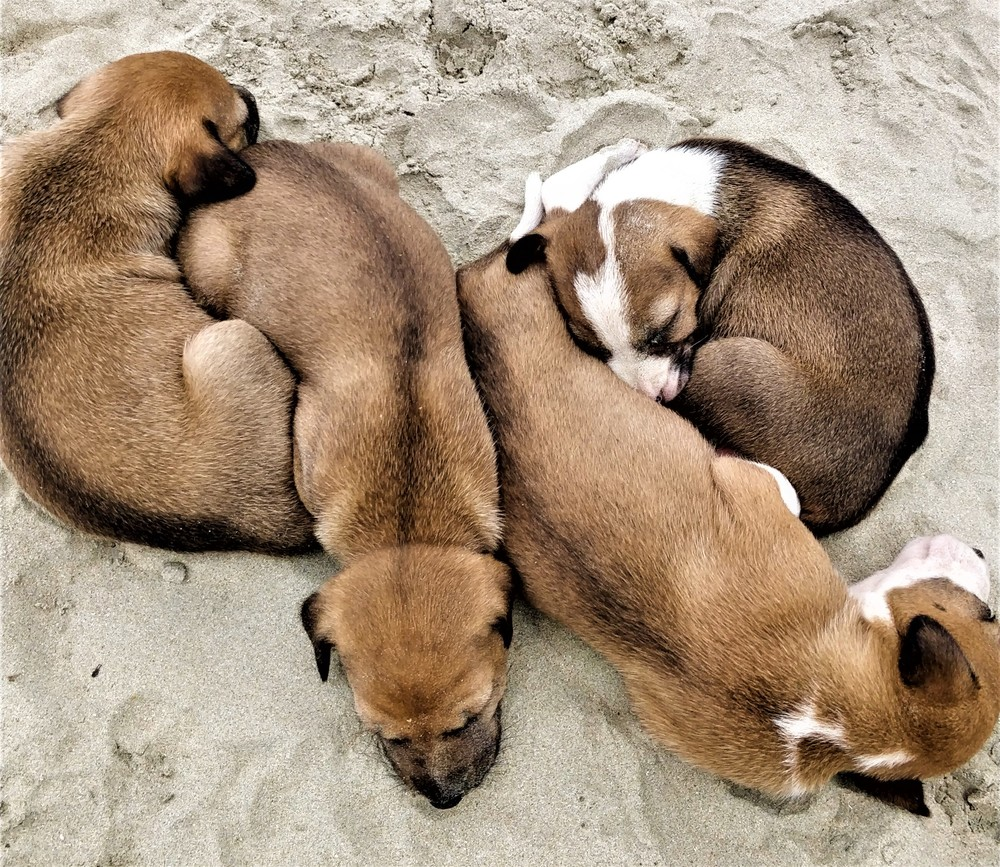 Puppies on the beach