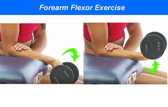forearm flexor exercise