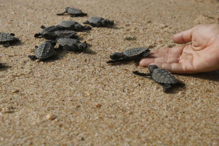 Pesca, plástico, aquecimento global e óleo ameaçam tartarugas