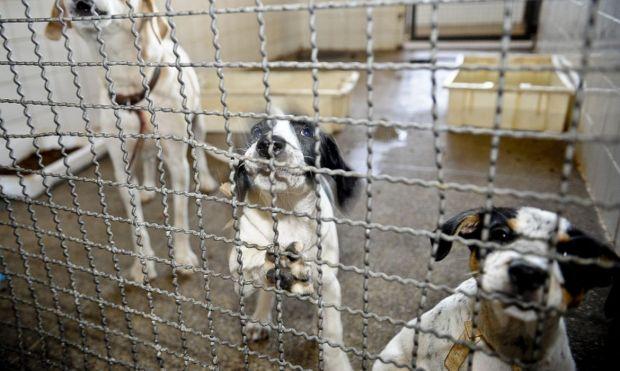 Cachoeiro tem 10 cães adultos disponíveis para adoção