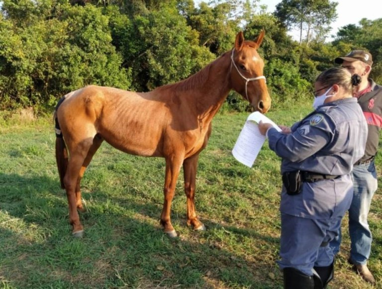 Dezesseis cavalos chegam para reforçar a Polícia Montada no Estado
