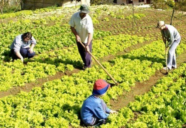 Mais de 100 propostas de 48 cidades para a agricultura familiar