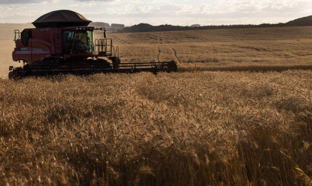 Ipea prevê menor crescimento do agronegócio brasileiro em 2021