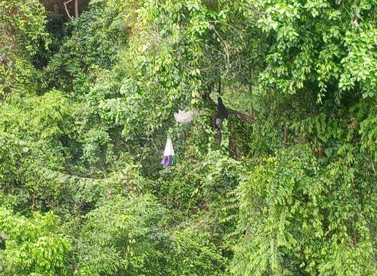 VÍDEO: Piloto de parapente fica preso em árvore após sofrer queda em Castelo