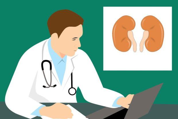 Pesquisa desenvolve tratamento para preservar rim em caso de câncer