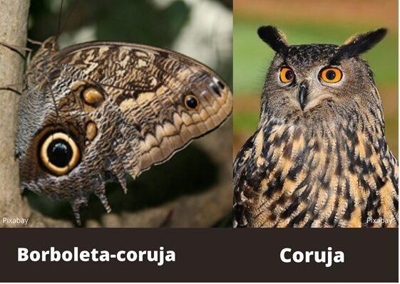 Biologia Curiosa: os mestres do disfarce no mundo animal