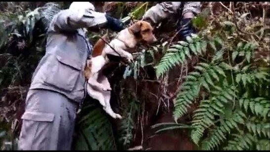 Bombeiros resgatam cadela que ficou presa por 10 dias no alto de pedra – vídeo
