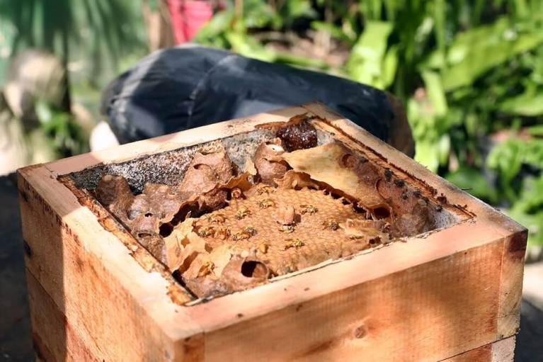 Deputados pedem proteção de abelhas, fonte de renda para pequenos produtores
