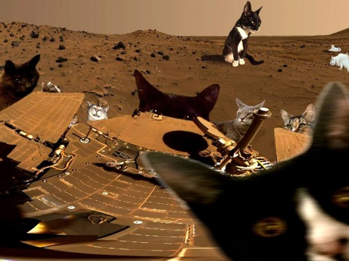 cats on mars - Diabetes Dominator by Daniele Hargenrader