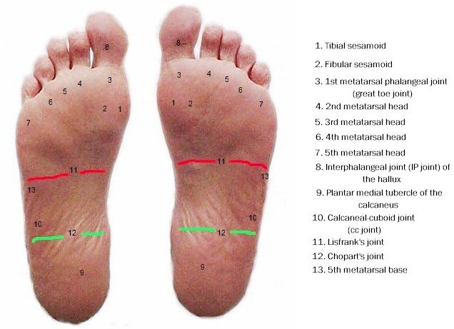 plantar_foot_mod_labeled_topography