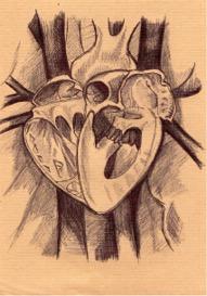Contre Cœur (Histoire du cœur)
