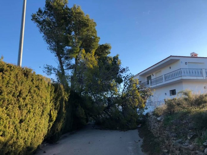 El vent arranca arbres a Tírig