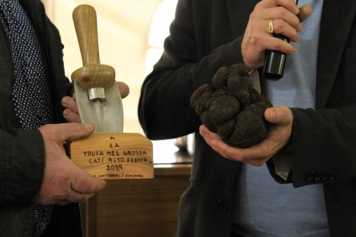 Una tòfona negra de 624 grams gana el concurs de Catí