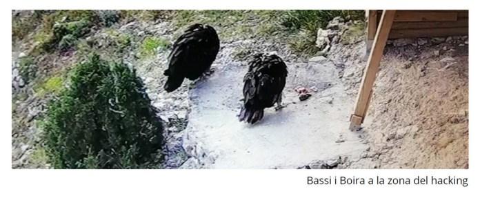 BASSI I BOIRA