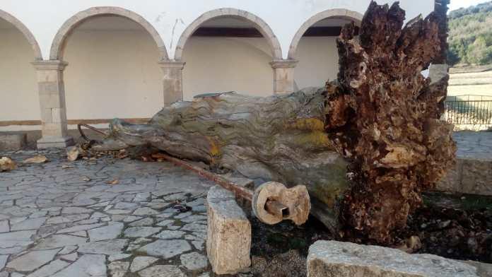 Om del Llosar caigut a Vilafranca (2)