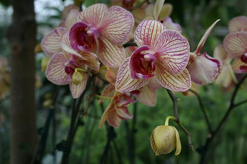 Purple and yellow orchids