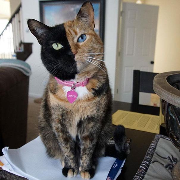 társkereső weboldal macska lány