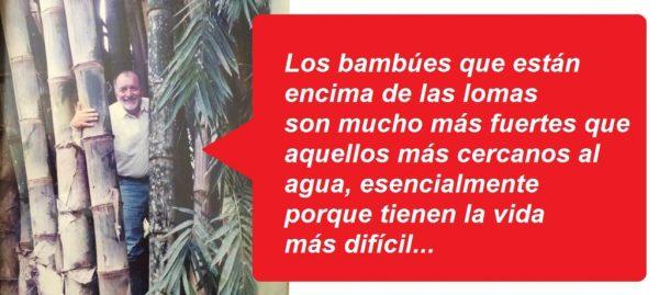 Carlos Peñahererra cultiva bambú gigante. Hace 20 años inició este camino en su finca cerca a La Concordia.