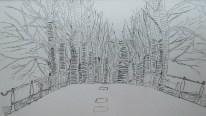 Trees along small road