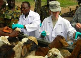 N/R Veterinary services appeals to government for more personnel to reach out more to farmers