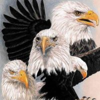 Eagle Diamond Painting Kit