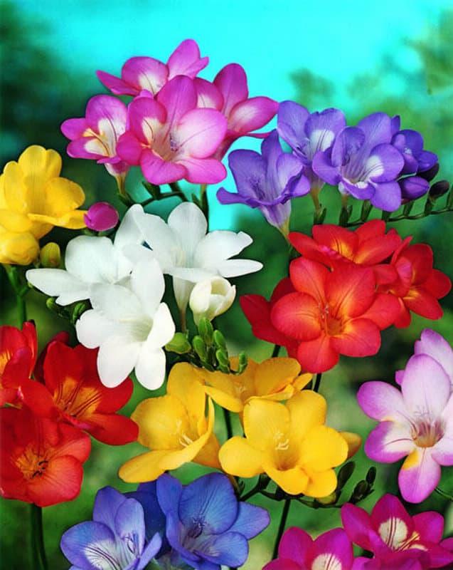 Flower Garden Diamond Painting Kit