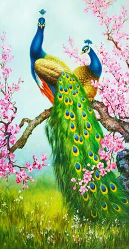 Paintings Exotic Animals Beautiful Colors