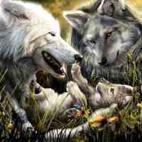 Wolf Pup Diamond Painting Kit
