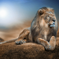 Crouching Lion Diamond Painting Kit