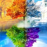 Four Seasons Tree 2 Diamond Painting Kit