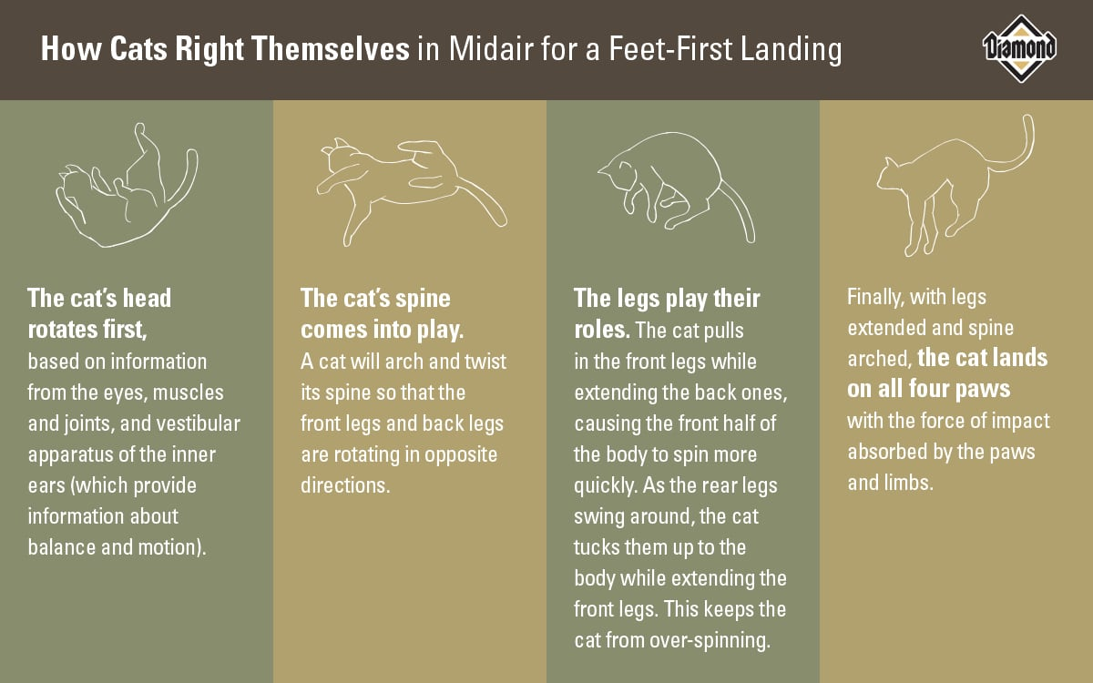How Cats Right Themselves in Midair Chart | Diamond Pet Foods