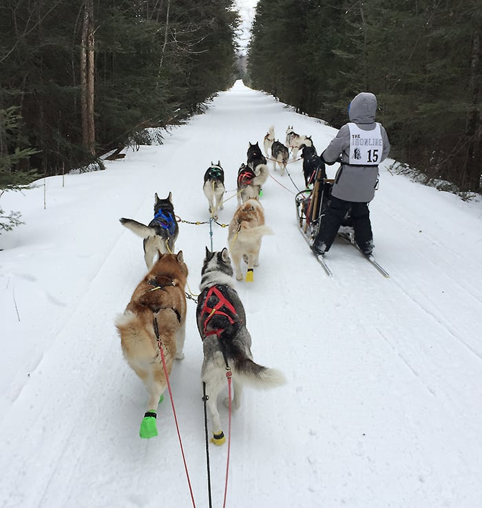 Two Sleds Being Pulled by Husky Dogs During a Race | Diamond Pet Foods