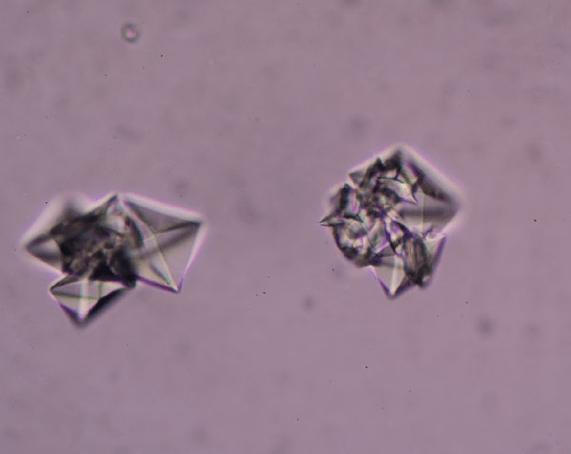 Pet Struvite Crystals | Diamond Pet Foods