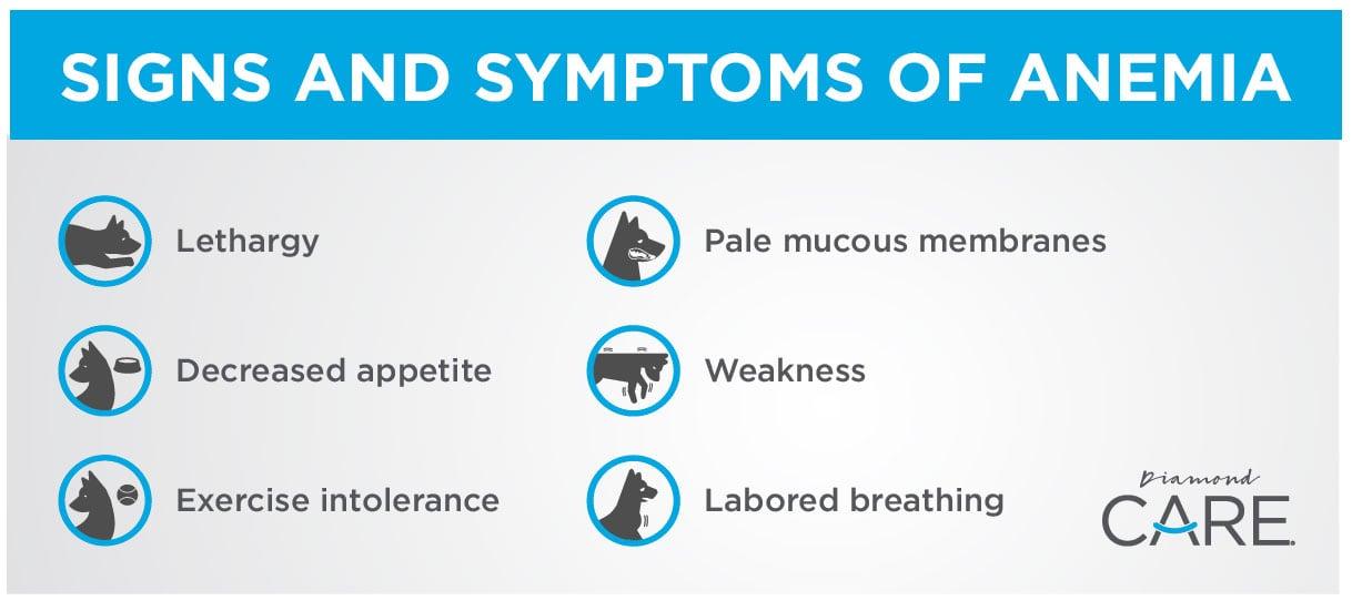 Renal Dog Anemia Infographic | Diamond Pet Foods