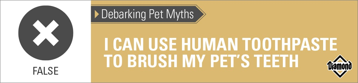 False: Human Toothpaste Should Not Be Used on Pets   Diamond Pet Foods