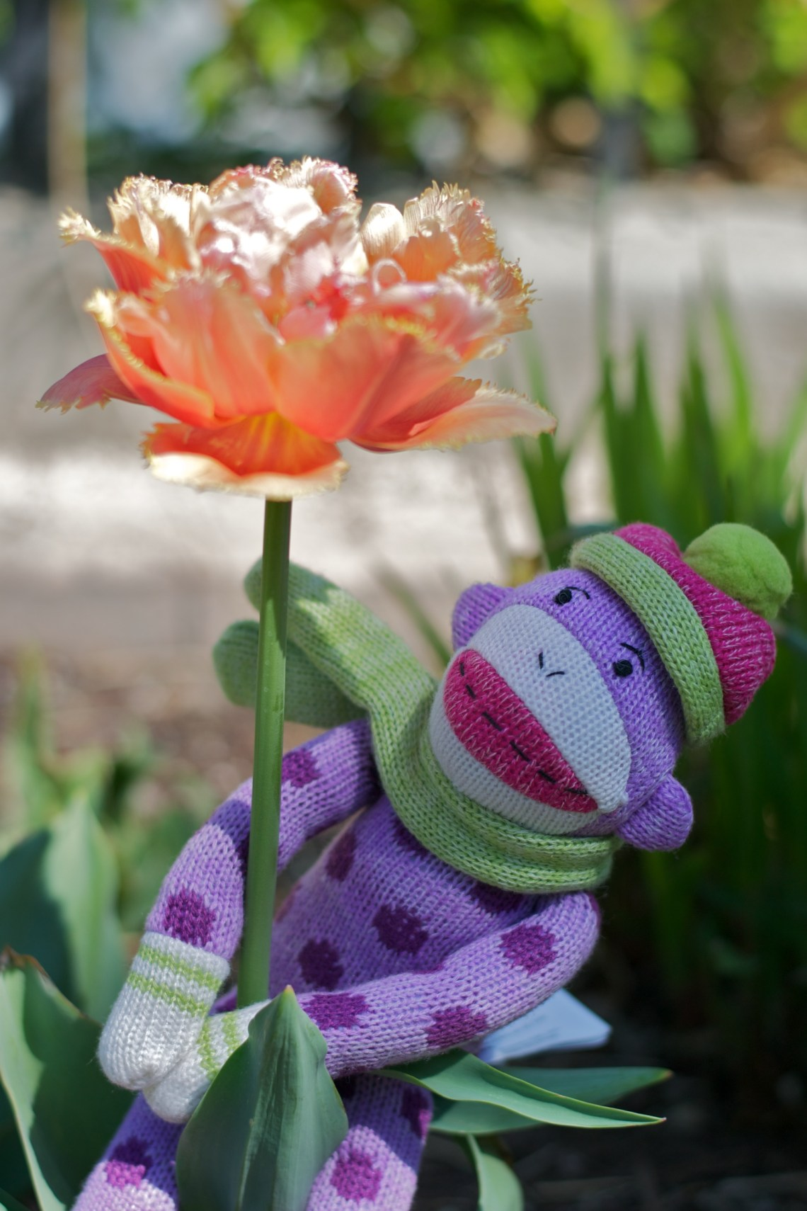 Sock Monkey Hugs a Flower