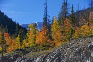 Rocks, Colorful Aspen, Snowy Mountain