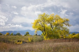 Yellow Tree stands out