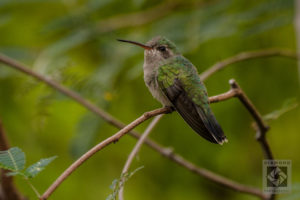 Hummingbirds photo tips