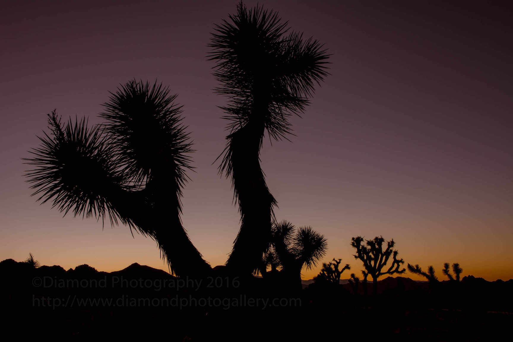 Photographing Joshua Tree National Park full moon