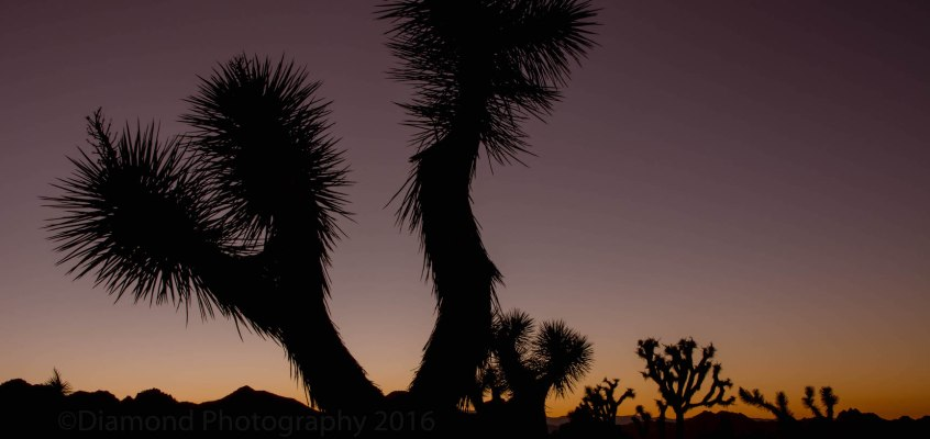 Photographing Joshua Tree National Park full moon