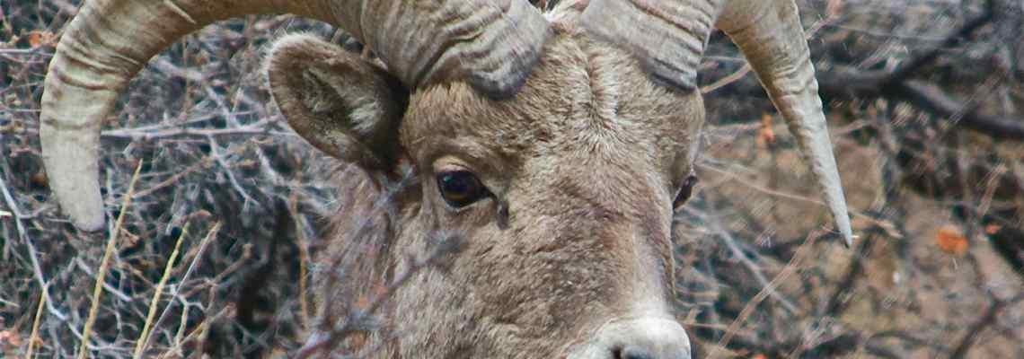 5 Tips for Taking Better Wildlife Photos
