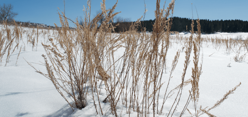 Winter at Castlewood Canyon State Park