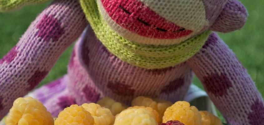 Adventures of Dottie, the sock monkey: Raspberry Picking