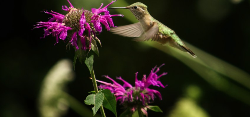 Hummingbirds!!!