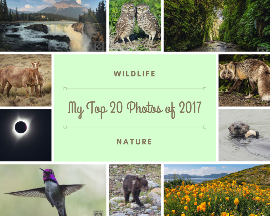 Top 20 Photos of 2017