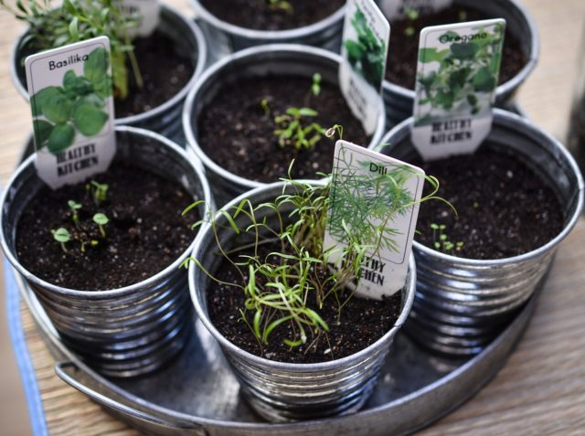 indoor herb garden to save $520 every year