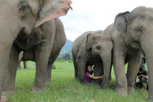 Elephant Natural Park