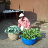 Recipes for Kenyan Kale and Spinach for the Hotel - Recommendations?