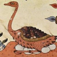 Darwin in Arabia - The Introduction of Evolution into the 19th Century Middle East